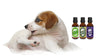 How to Make Your Dog Flea-Free Naturally