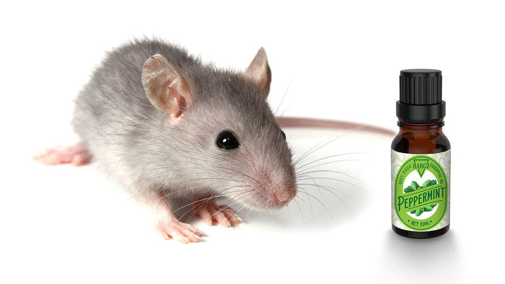 How to Use Peppermint Essential Oil to Get Rid of Mice