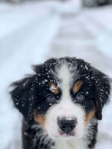 How to know if your dog is cold?