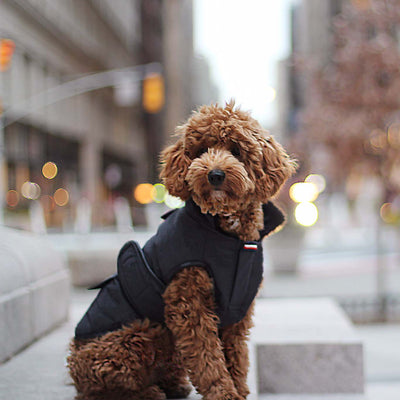 """Little Black"" Dog Jacket"