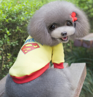 Warm Sweater - Superman - 4paws