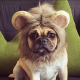 Lion Head Hat - 4paws
