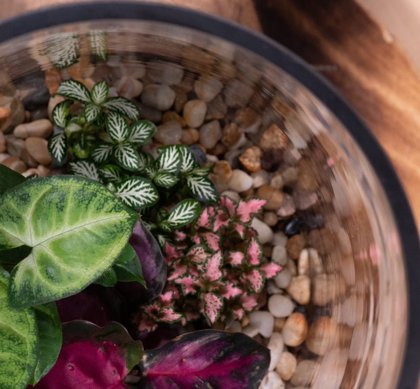 Pebbled Terrariums