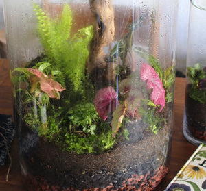 Custom Terrariums
