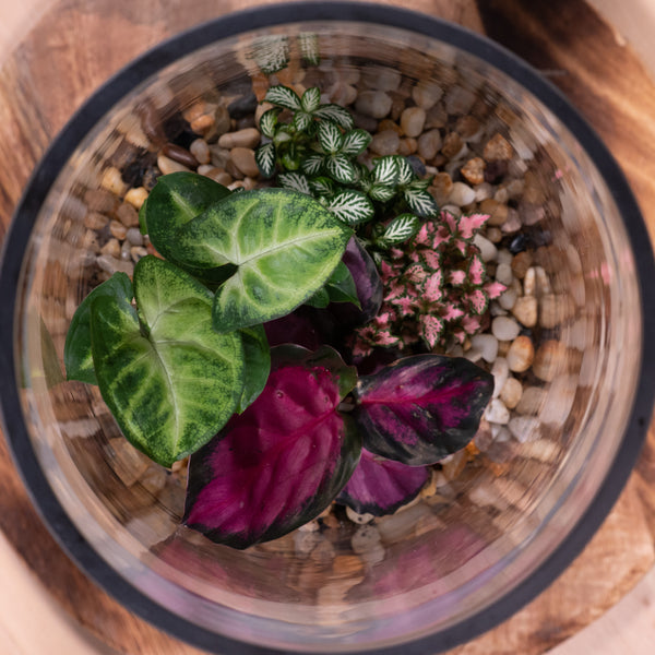 Tropic Pebbled Terrarium
