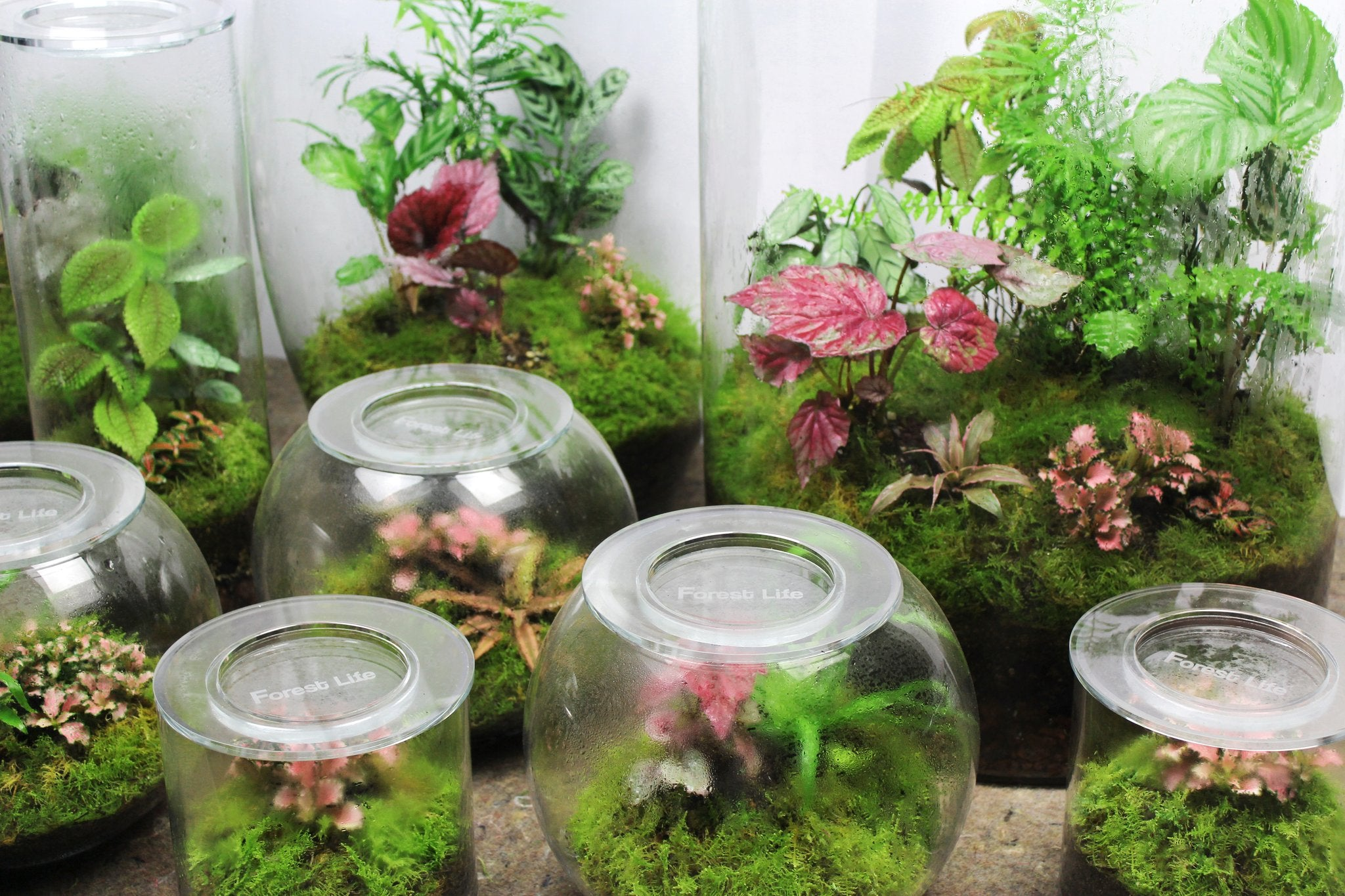 What is a terrarium? What is an ecosystem?
