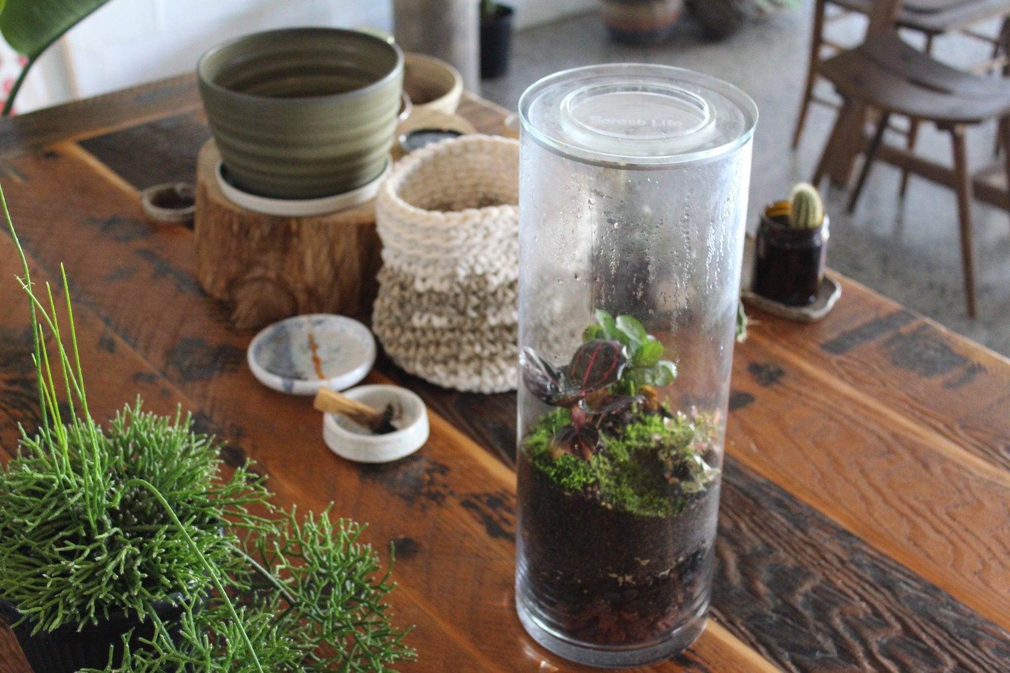 Bring nature indoors with your own unique handcrafted ecosystem. Low maintenaince and clean, a terrarium adds a beautiful living design element to any space with indirect sunlight.