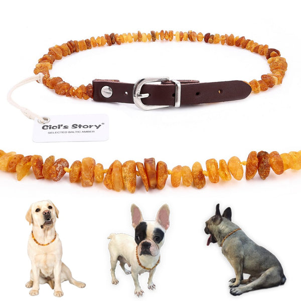 Baltic Amber Dog Collar