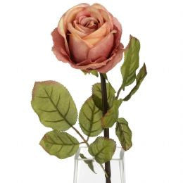 Autumn peach single rose stem