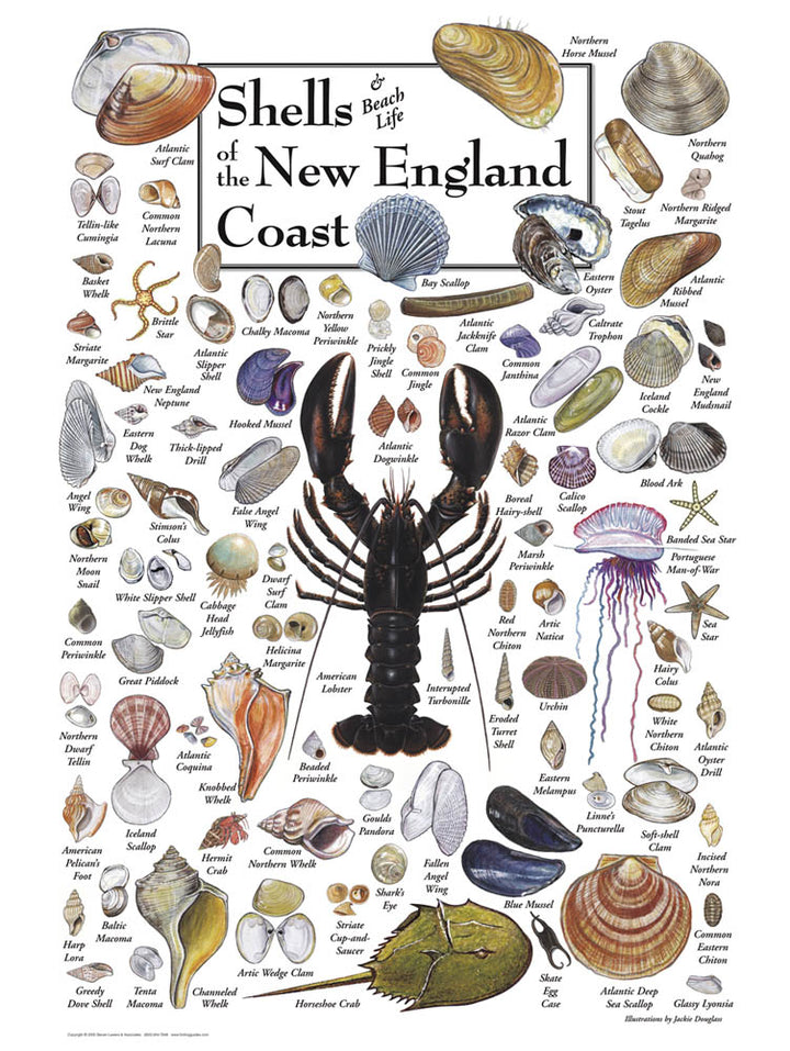 Shells of New England Puzzle