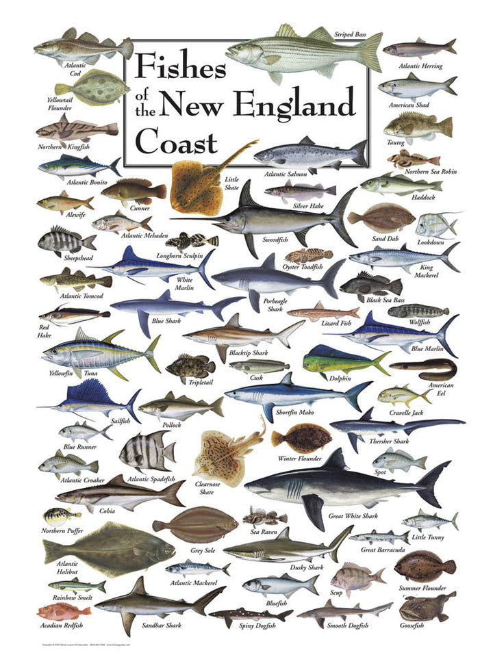 Marine Life of New England Puzzle