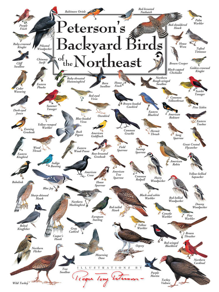 Backyard Birds of The Northeast Puzzle
