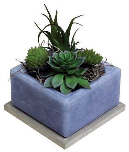Succulent | Blue |  Scented Wax by Habersham