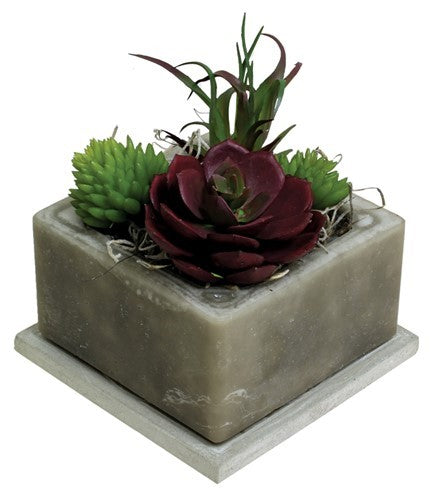 Succulent with flower - Scented Wax by Habersham