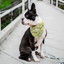 Load image into Gallery viewer, Pet Bandana  - Lemon Style - P.A.W