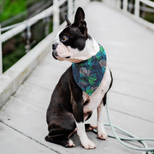 Load image into Gallery viewer, Pet Bandana -Tropical Home - P.A.W