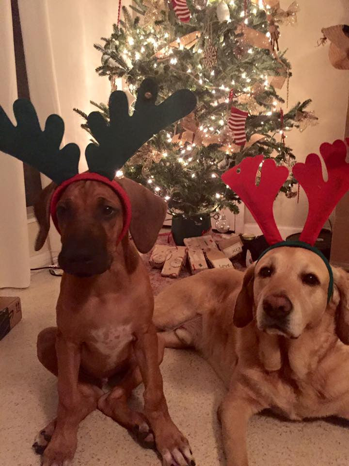 Safeguarding Your Pet This Holiday Season