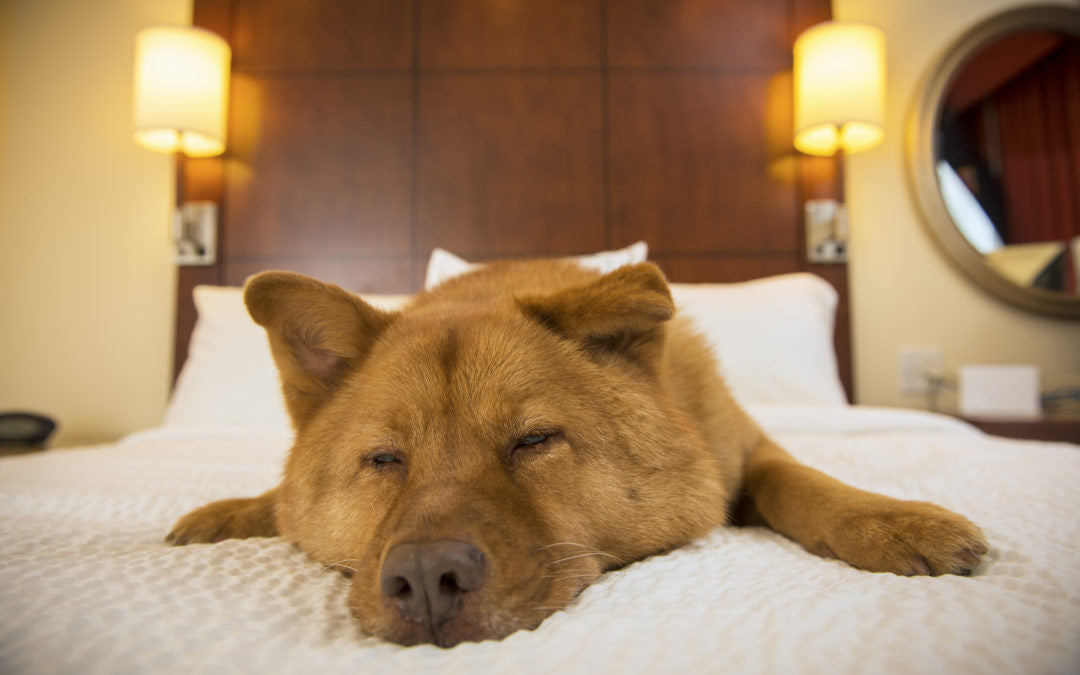 The Top Dog-Friendly Hotels in the US