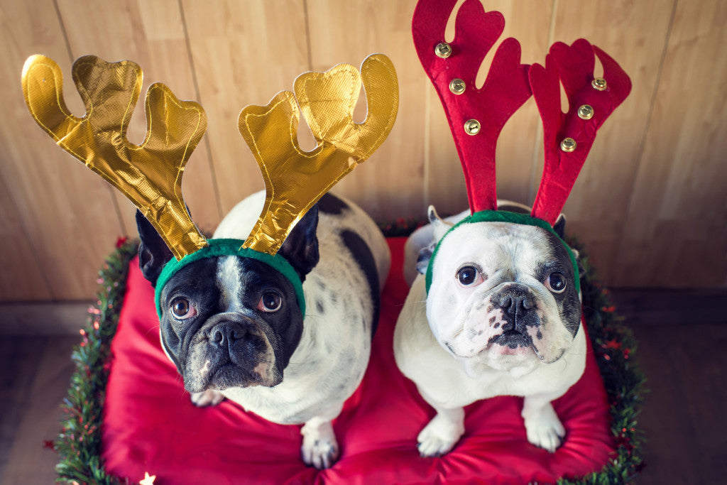 Last Minute Christmas Gift Ideas For Your Dog