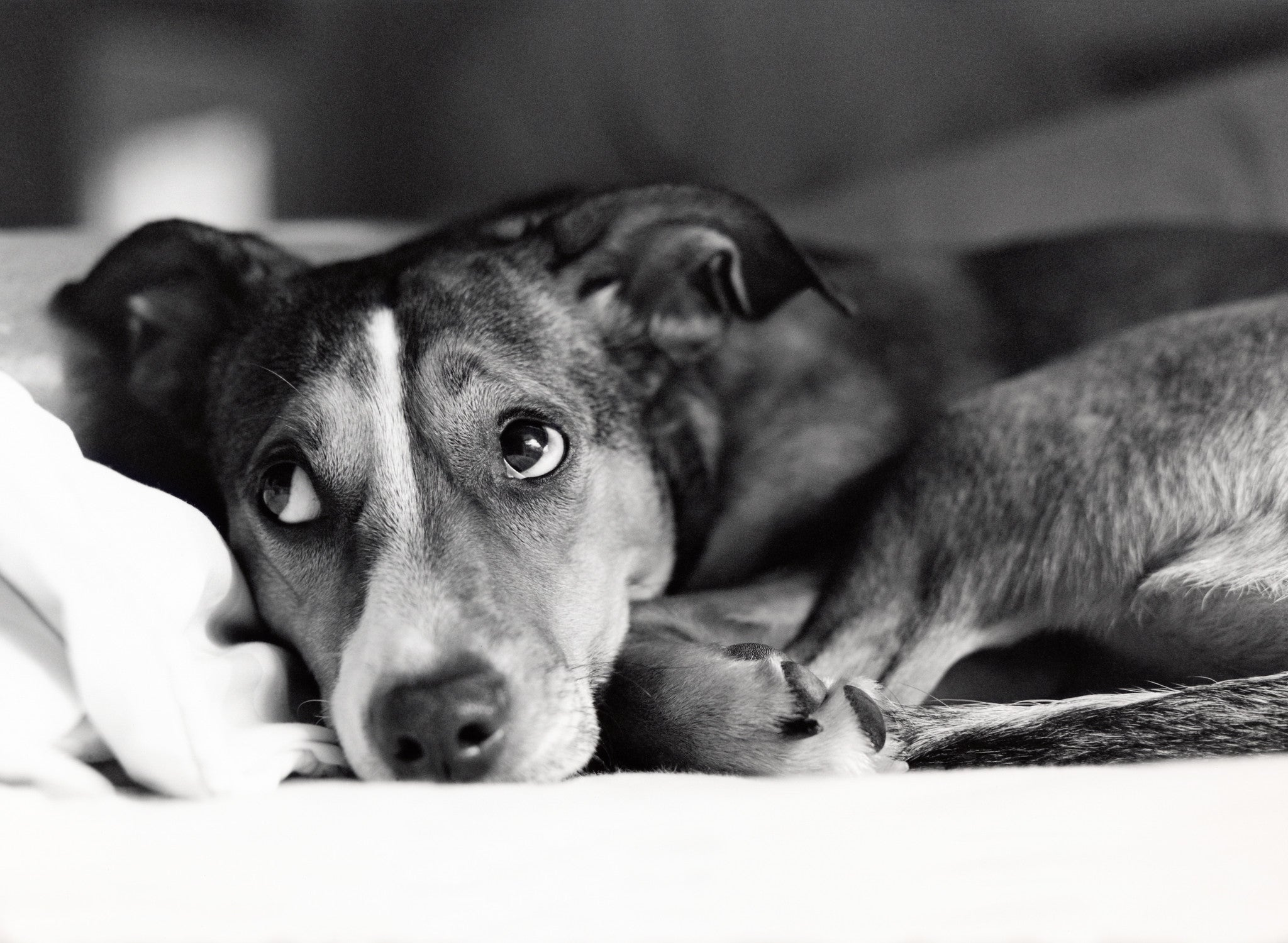 Most Common Causes of Anxiety in Dogs