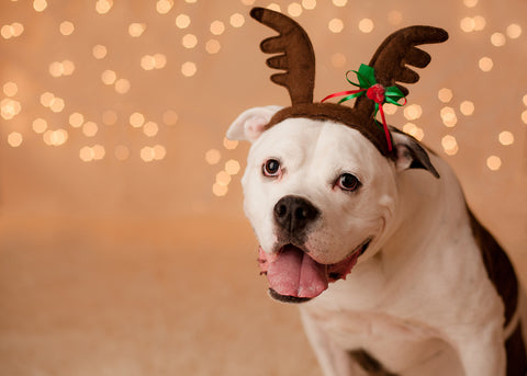 Tips for Reducing Dog Anxiety for the Holiday's
