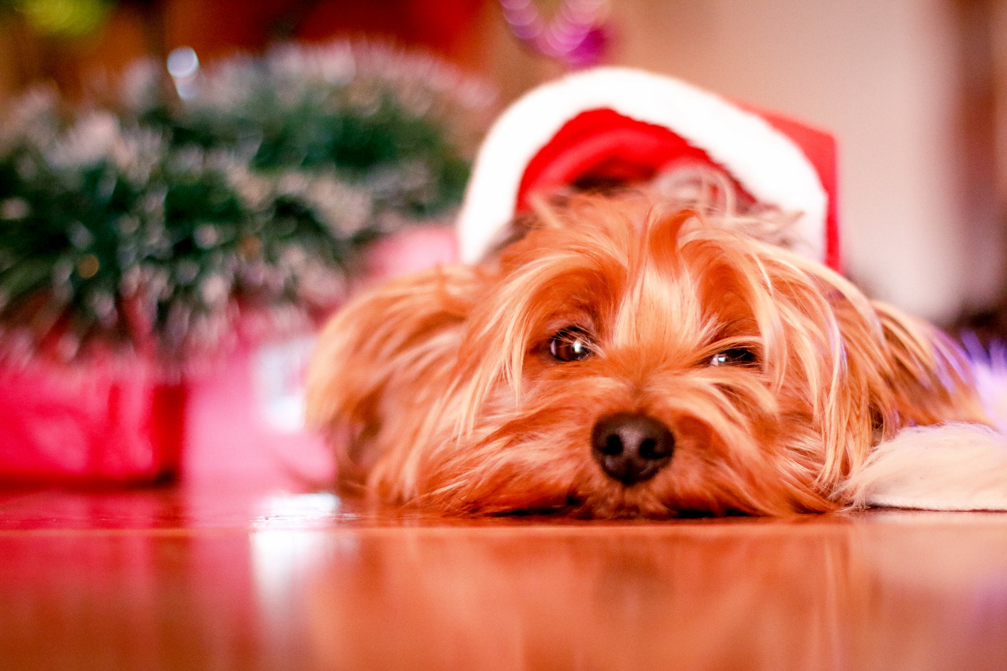 Holiday Tips with Dogs In Mind