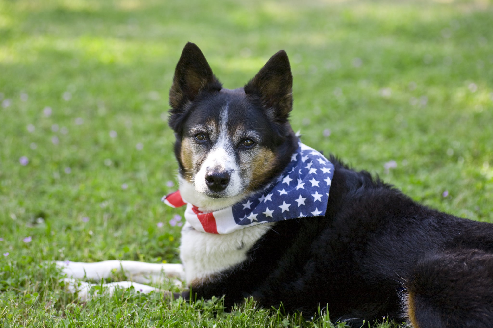 Help Your Dog Have a Safe, Happy Fourth of July!