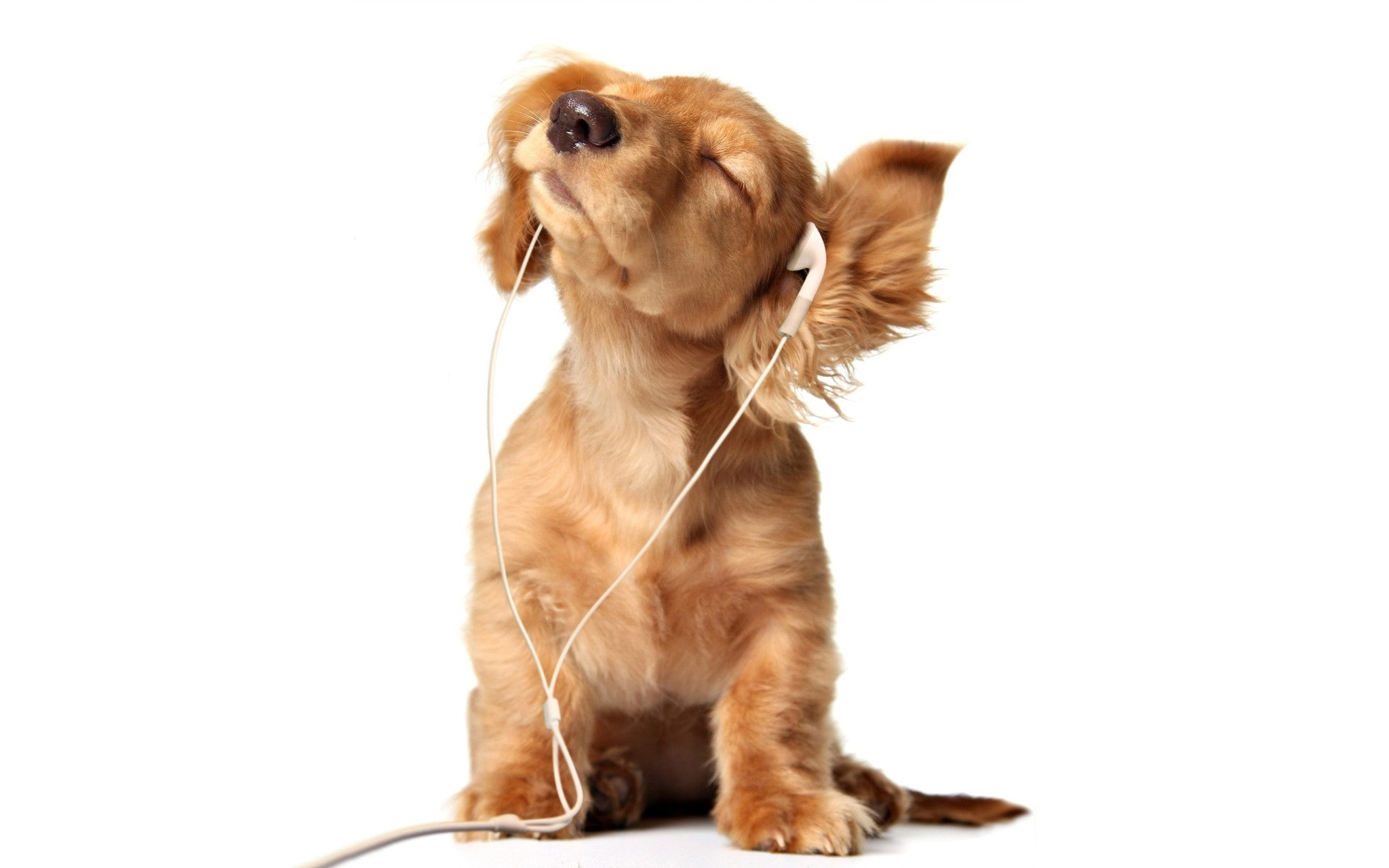 Can anti-anxiety music help your dog de-stress?