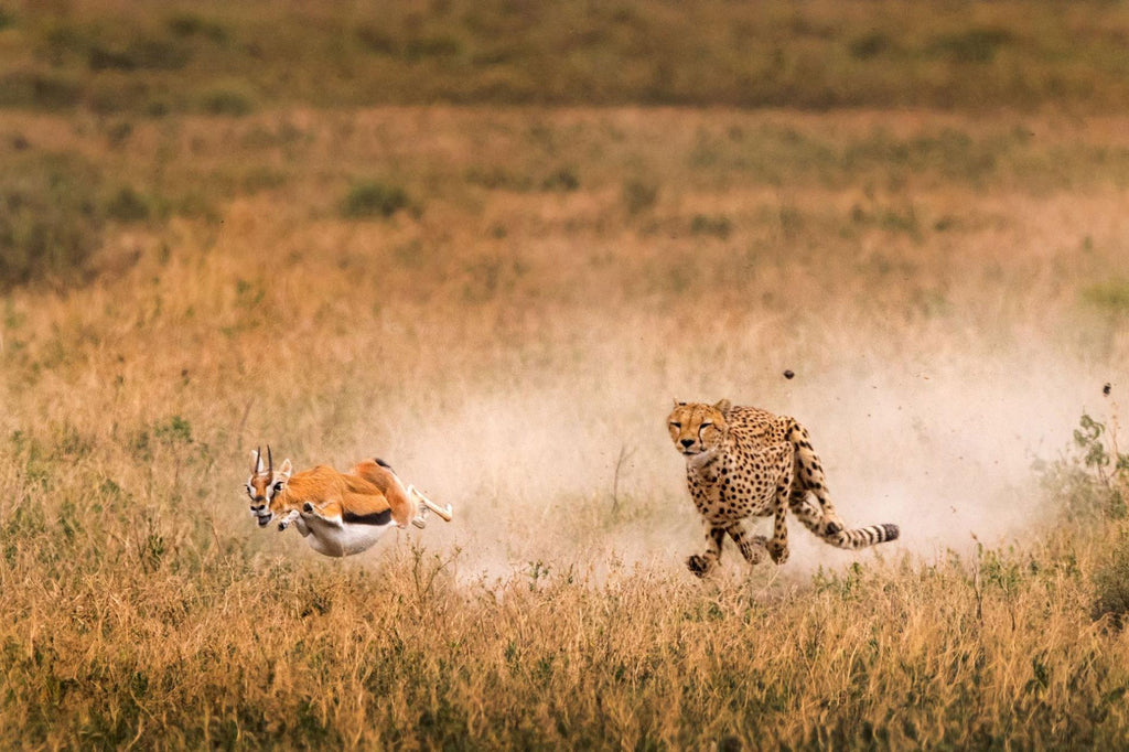 Predator vs Prey Self Defense