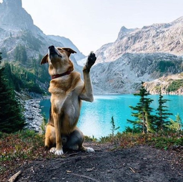 REI: Hiking or Backpacking with Your Dog