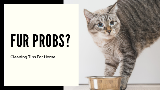 Cleaning Tips For Homes With Pets