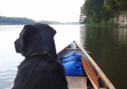Adventures with Fido: How to Camp with Your Dog