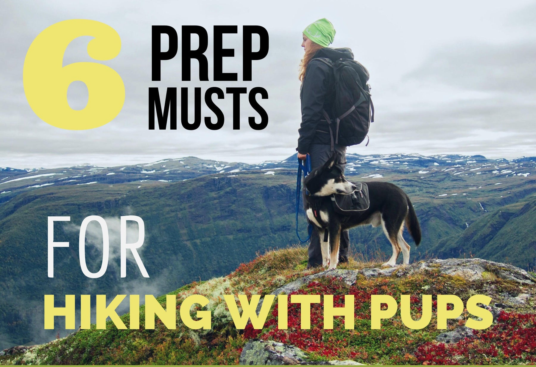 6 Tips for Hiking with Pups | Peacebone