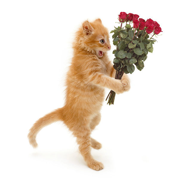 Kitten with Roses