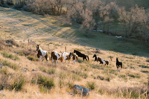 Horses on the Steerheard Ranch at the Madison McKinley photoshoot.
