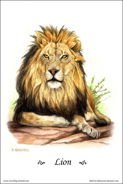 Traveling Animals Poster - Lion