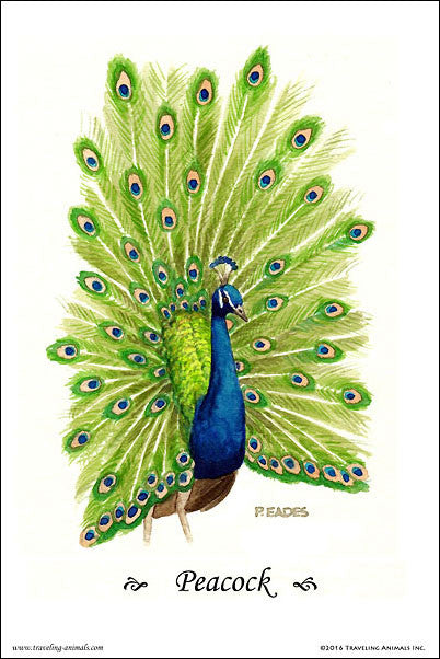 Traveling Animals Poster - Peacock