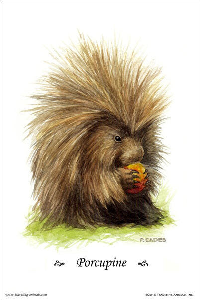 Traveling Animals Poster - Porcupine