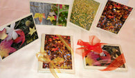 Fall Cards Gift Set-Greeting Cards/Prints-HRH Studio Boutique