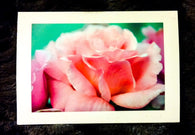 Fluffy Rose Card-Greeting Cards/Prints-HRH Studio Boutique
