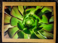 Succulent Card-Greeting Cards/Prints-HRH Studio Boutique