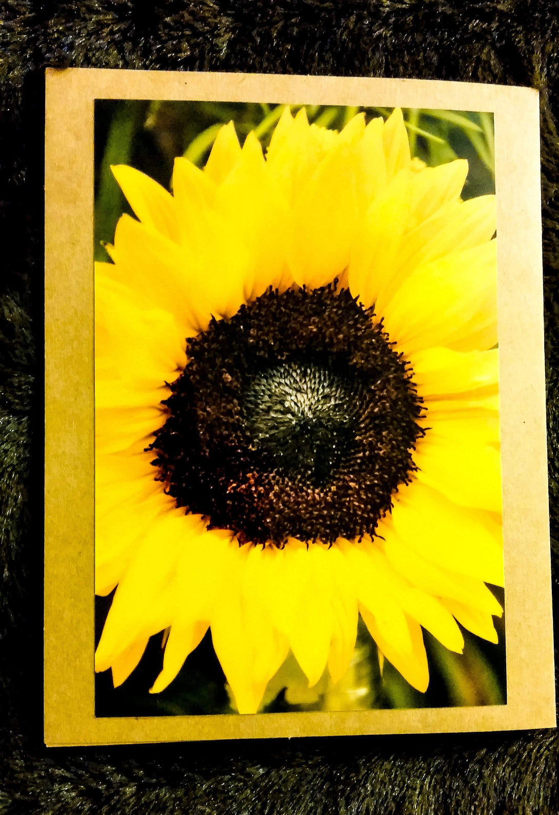 Sunflower Card-Greeting Cards/Prints-HRH Studio Boutique