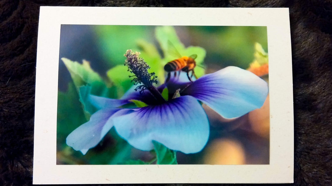 The Landing Bee Card-Greeting Cards/Prints-HRH Studio Boutique