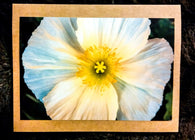 White Poppy Card-Greeting Cards/Prints-HRH Studio Boutique