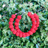 Red Knot Hoop Earrings