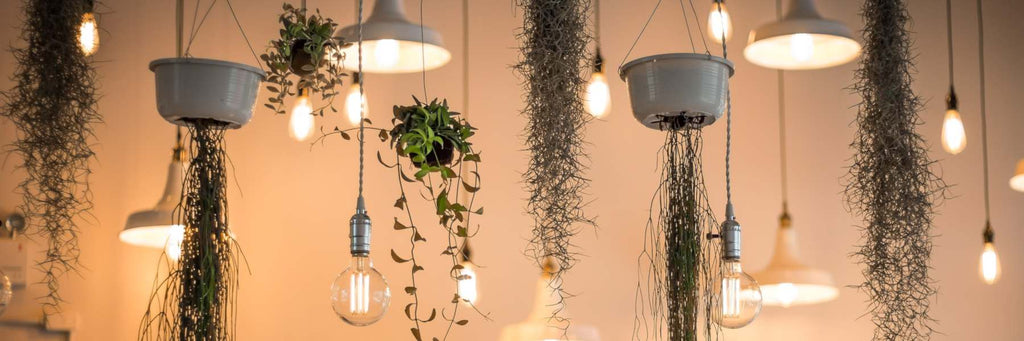 hanging plants and lights