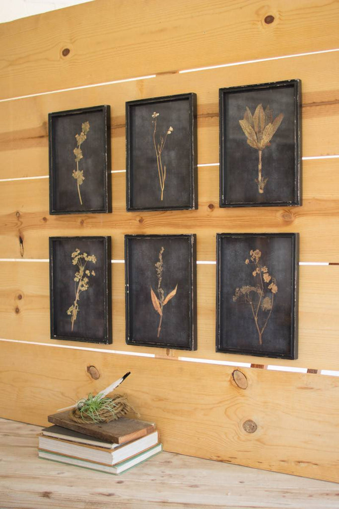 six botanical prints framed and protected by glass