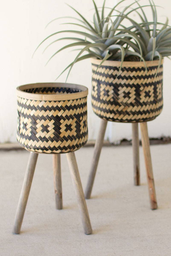 close up of bamboo plant stands
