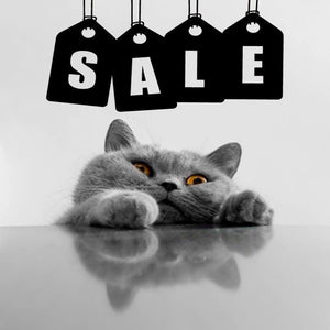 Kitty Kat Accessories Clearance Sale