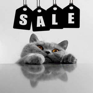 clearance accessories sale by Kitty Kat